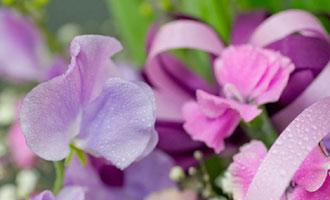 みずみずしいお花