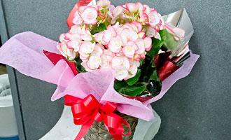 花鉢のラッピング例です